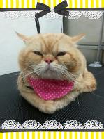 cat200